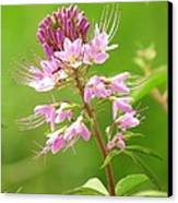 Beeweed . . .with Ant Canvas Print by  Feva  Fotos