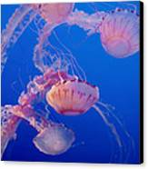 Below The Surface 3 Canvas Print by Jack Zulli