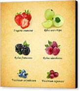 Berry Canvas Print by Mark Rogan