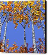 Birch Grove Canvas Print by Cynthia Decker