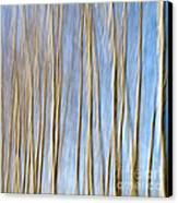 Birch Trees Canvas Print by Stelios Kleanthous