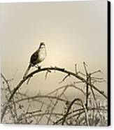 Bird In The Briar Canvas Print by Artist and Photographer Laura Wrede