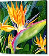 Bird-of-paradise Canvas Print by Janis Grau