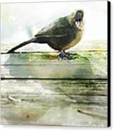 Bird On The Deck Canvas Print by Artist and Photographer Laura Wrede