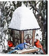 Birds On Bird Feeder In Winter Canvas Print by Elena Elisseeva