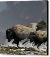 Bison Stampede Canvas Print by Daniel Eskridge