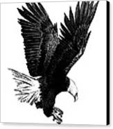 Black And White With Pen And Ink Drawing Of American Bald Eagle  Canvas Print by Mario Perez