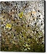 Black-eyed Susan On Rocks Canvas Print by Patricia Keith