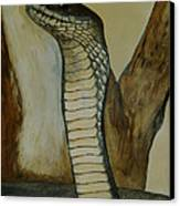 Black Mamba Canvas Print by Tracey Beer