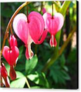 Bleeding Heart Canvas Print by Brittany H