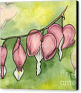 Bleeding Hearts Canvas Print by Nora Blansett