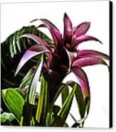 Blooming Bromeliad Canvas Print by Christi Kraft