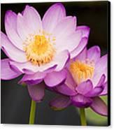 Blooming Violet  Canvas Print by Naushad  Waheed