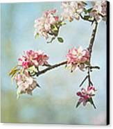 Blossom Branch Canvas Print by Kim Hojnacki