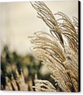 Blowing In The Wind Canvas Print by Heather Applegate