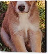 Blue Eyed Pup Canvas Print by Dennis Nadeau