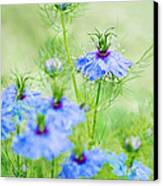 Blue Flowers Canvas Print by Diana Kraleva