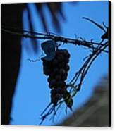 Blue Grapes Canvas Print by Dany Lison