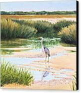Blue Heron Canvas Print by Karol Wyckoff