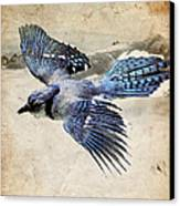 Blue Jay In Flight Canvas Print by Ray Downing