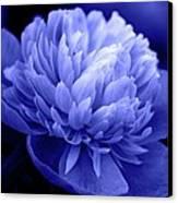 Blue Peony Canvas Print by Sandy Keeton