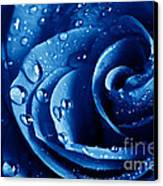 Blue Roses Canvas Print by Boon Mee