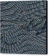 Blue Sheets Canvas Print by Tim Allen