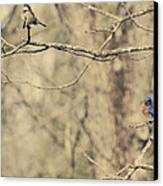 Bluebird And Sparrow Canvas Print by Heather Applegate