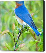 Bluebird Joy Canvas Print by William Jobes