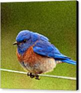 Bluebird  Painting Canvas Print by Jean Noren