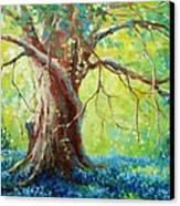 Bluebonnets Under The Oak Canvas Print by David G Paul