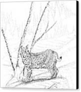 Bobcat Canvas Print by Carl Genovese