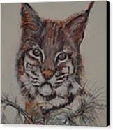Bobcat Canvas Print by Dorothy Campbell Therrien