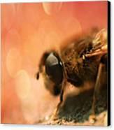 Bokeh Bee Canvas Print by Lee-Anne Rafferty-Evans