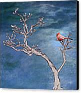 Bonsai Cardinal Canvas Print by John Haldane