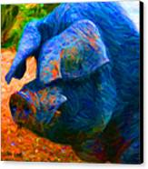Boss Hog - 2013-0108 - Square Canvas Print by Wingsdomain Art and Photography