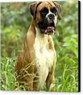 Boxer Dog Canvas Print by Jean-Michel Labat