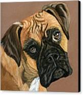 Boxer Dog Canvas Print by Sarah Dowson