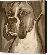 Boxer Dog Sepia Print Canvas Print by Robyn Saunders