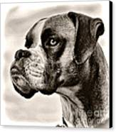 Boxer Profile Canvas Print by Lana Trussell