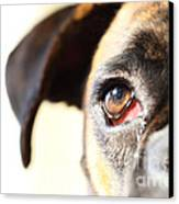 Boxer's Eye Canvas Print by Jana Behr