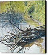 Branches By A River Bank Canvas Print by Nick Payne