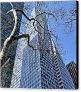Branching Out Canvas Print by Tony Ambrosio