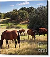 Breed Of Horses Canvas Print by Carlos Caetano