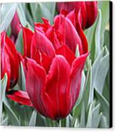 Brilliant Red Tulips In The Garden Canvas Print by Jennie Marie Schell