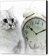 British Longhair Cat Time Goes By II Canvas Print by Melanie Viola