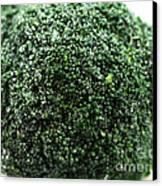 Broccoli Canvas Print by John Rizzuto