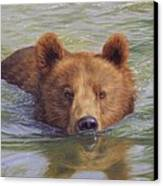 Brown Bear Painting Canvas Print by David Stribbling