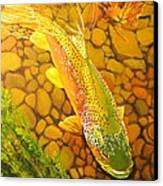 Brown Fish Canvas Print by Terry Gill