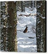 Brown Hare - Snow Wood Canvas Print by Phil Banks